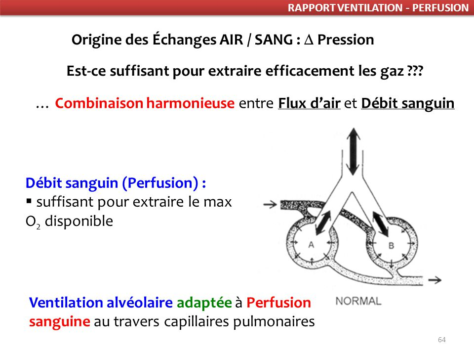 RAPPORT VENTILATION PERFUSION