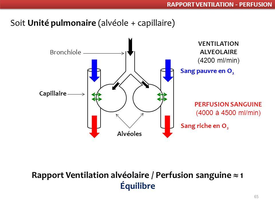 Rapport Ventilation alvéolaire / Perfusion sanguine  1 Équilibre