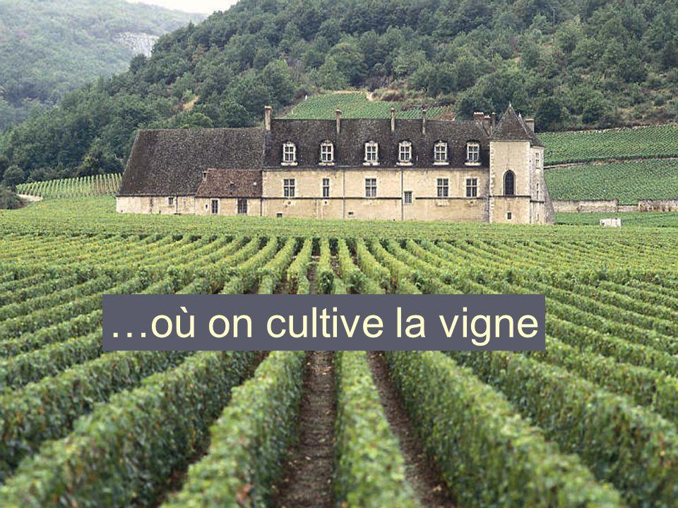 …où on cultive la vigne