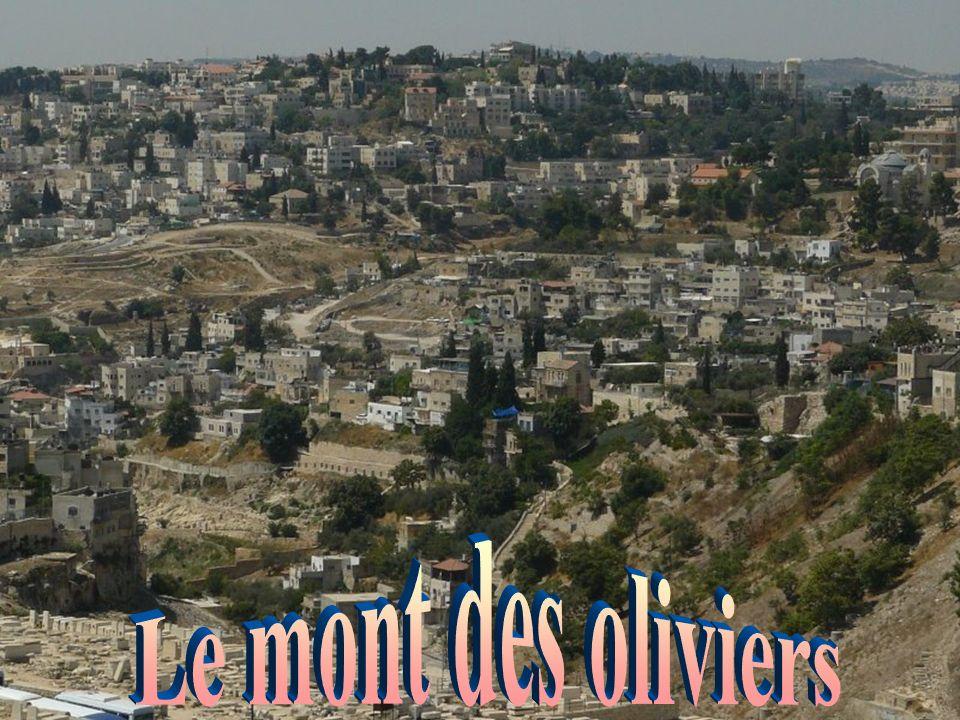 Le mont des oliviers