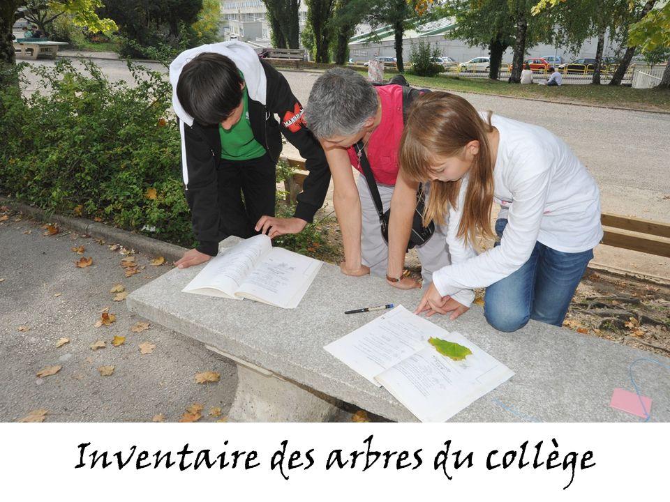 Inventaire des arbres du collège