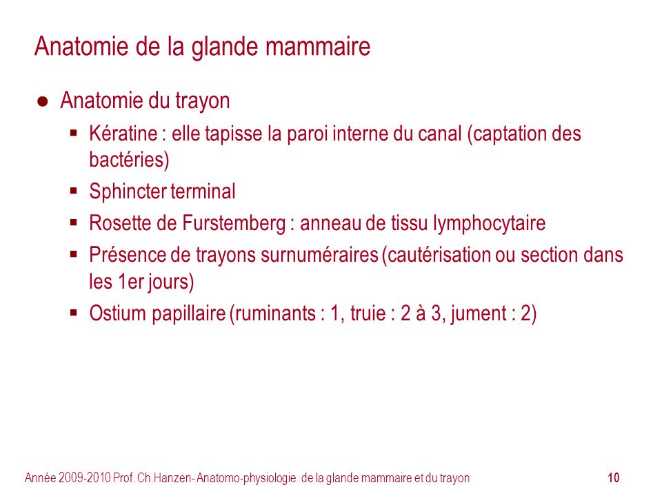 Anatomie de la glande mammaire
