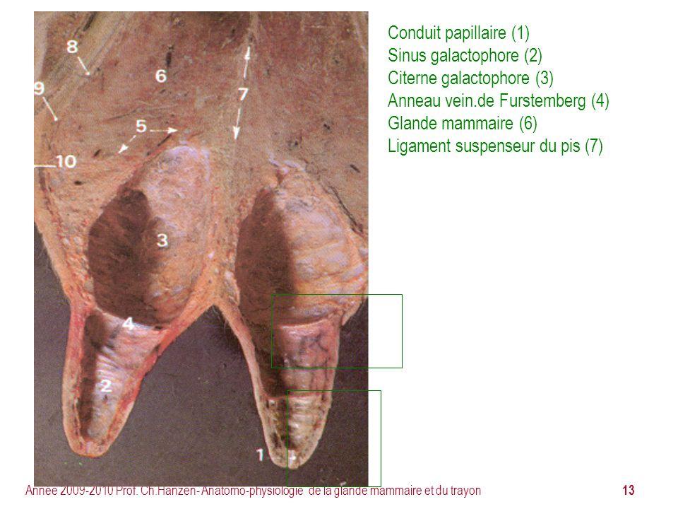 Citerne galactophore (3) Anneau vein.de Furstemberg (4)