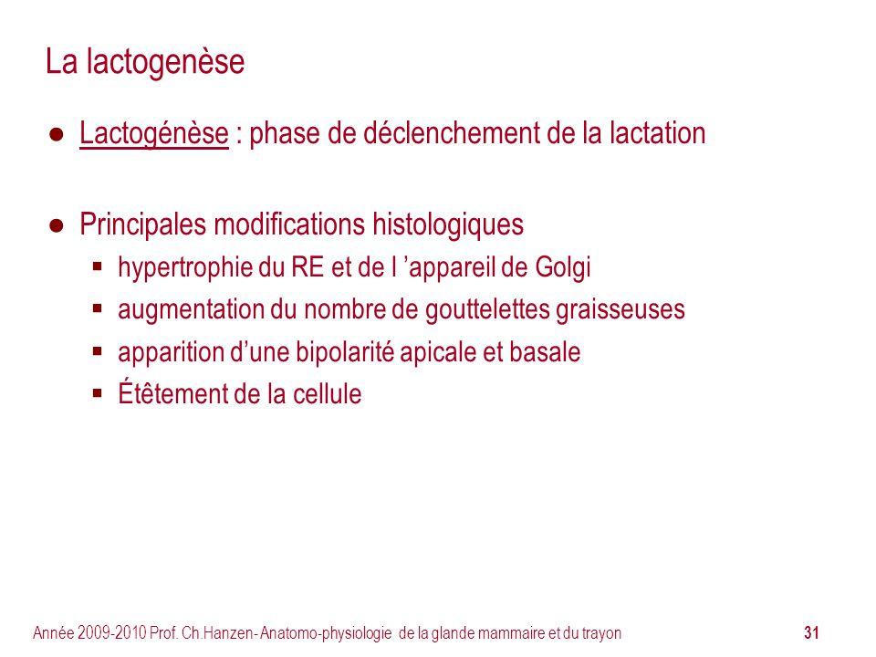 La lactogenèse Lactogénèse : phase de déclenchement de la lactation