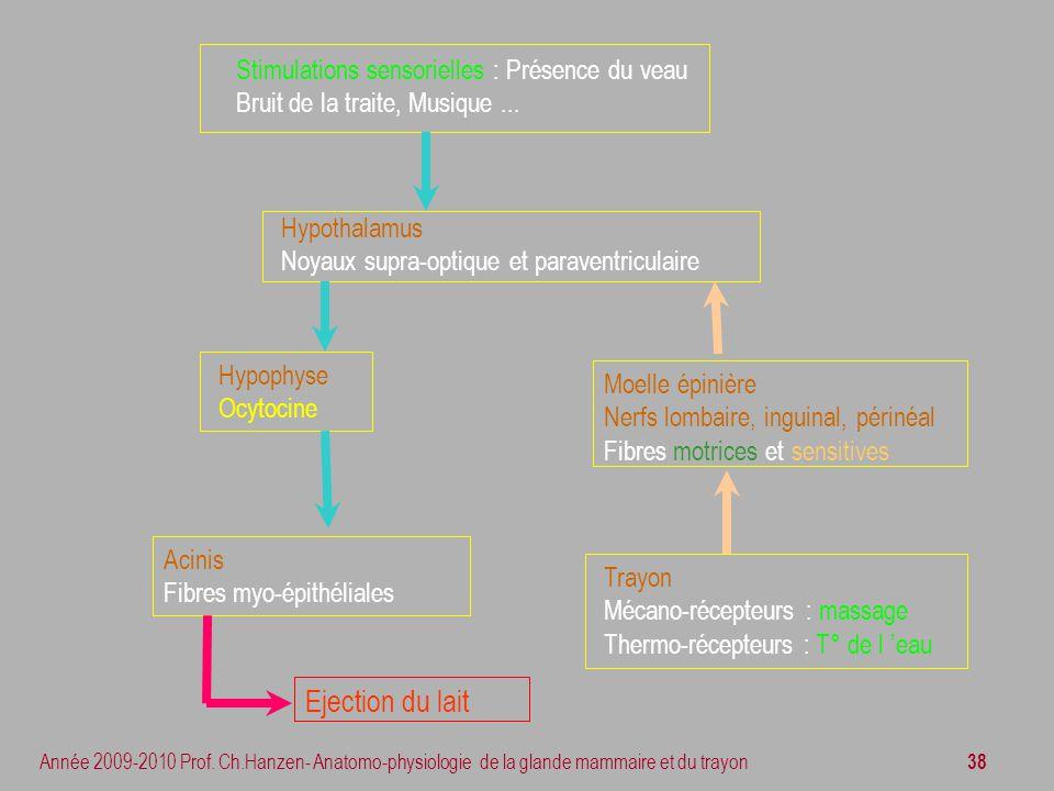 Ejection du lait Stimulations sensorielles : Présence du veau