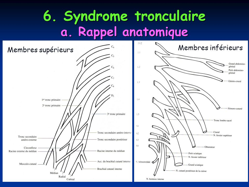 6. Syndrome tronculaire a. Rappel anatomique