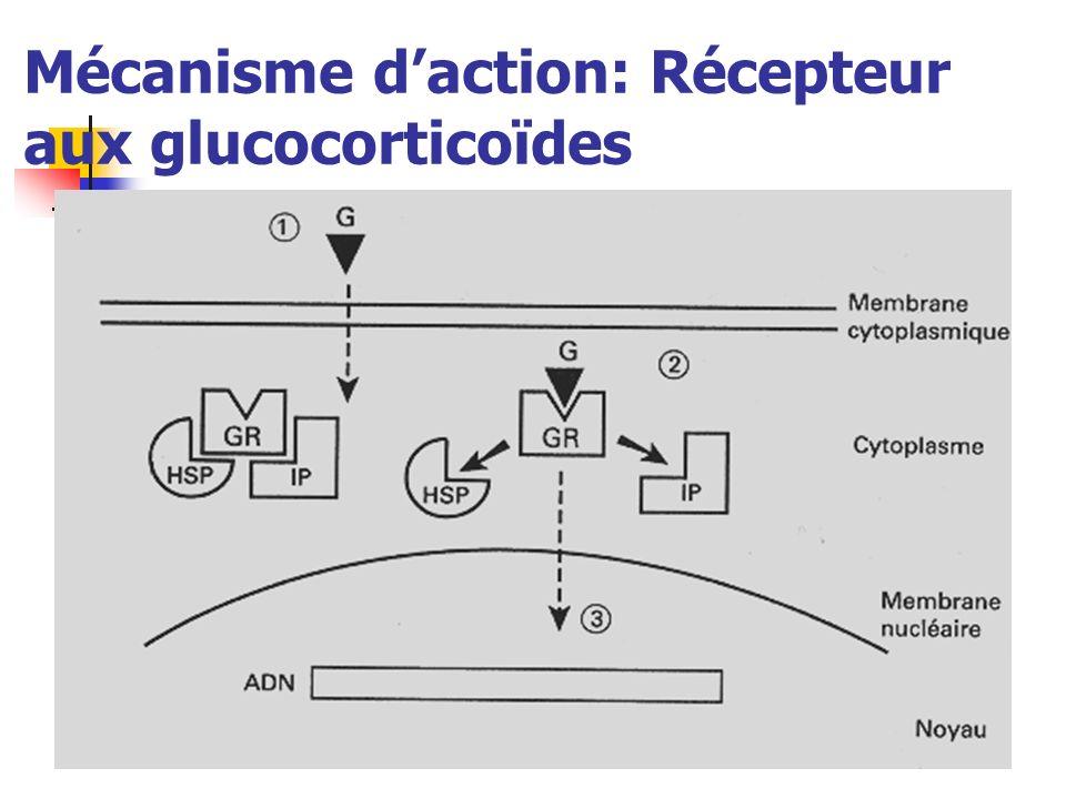 Mécanisme d'action: Récepteur aux glucocorticoïdes