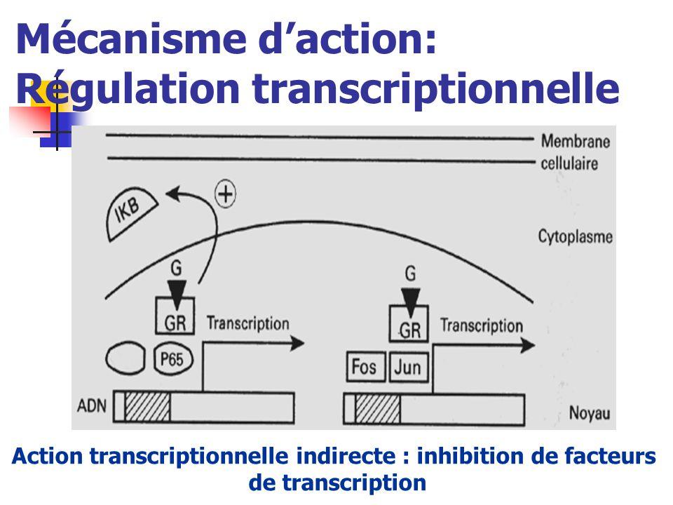 Mécanisme d'action: Régulation transcriptionnelle