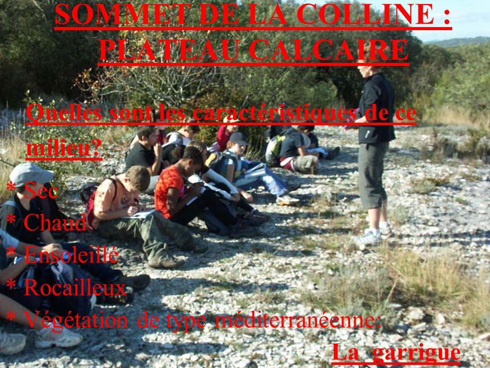 SOMMET DE LA COLLINE : PLATEAU CALCAIRE