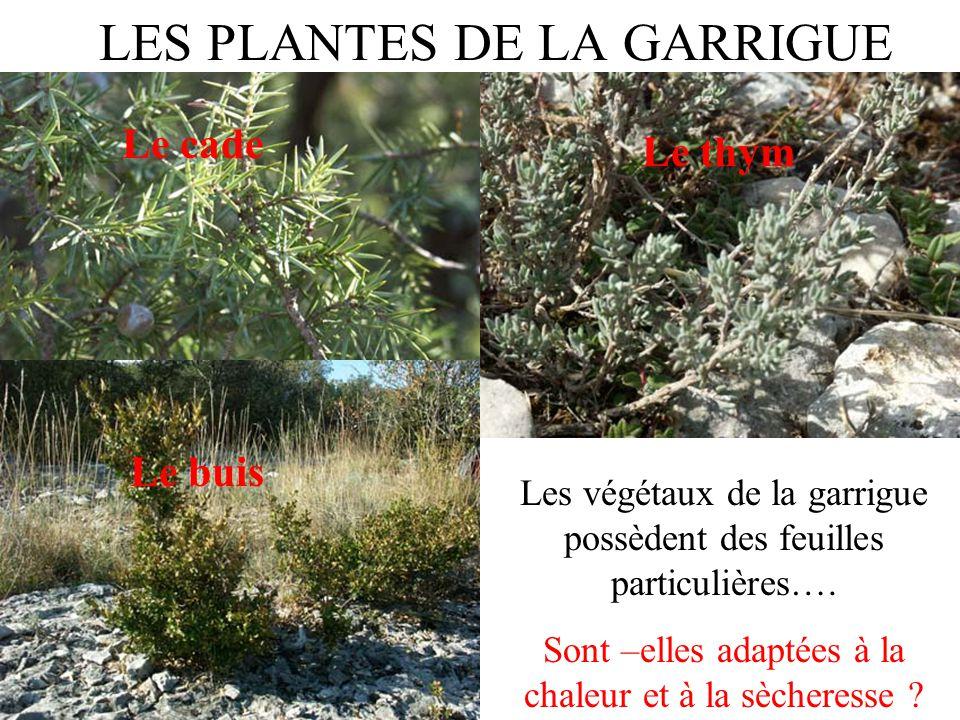 LES PLANTES DE LA GARRIGUE