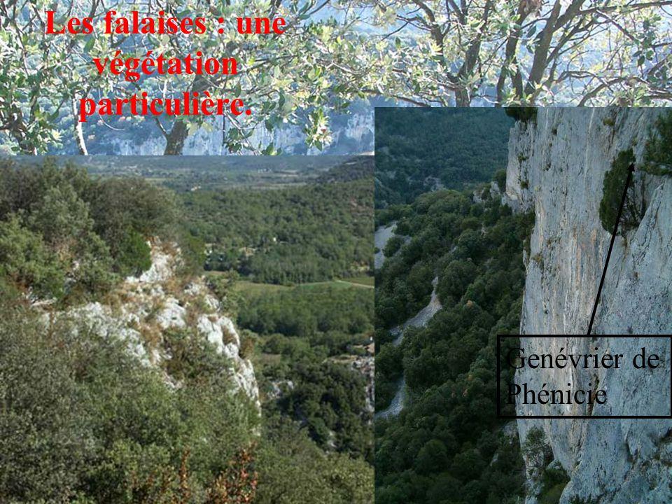 Les falaises : une végétation particulière.