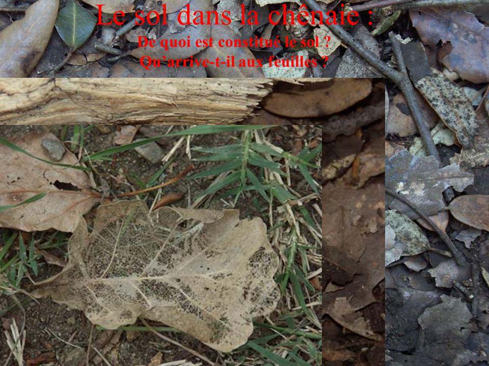 Le sol dans la chênaie : De quoi est constitué le sol