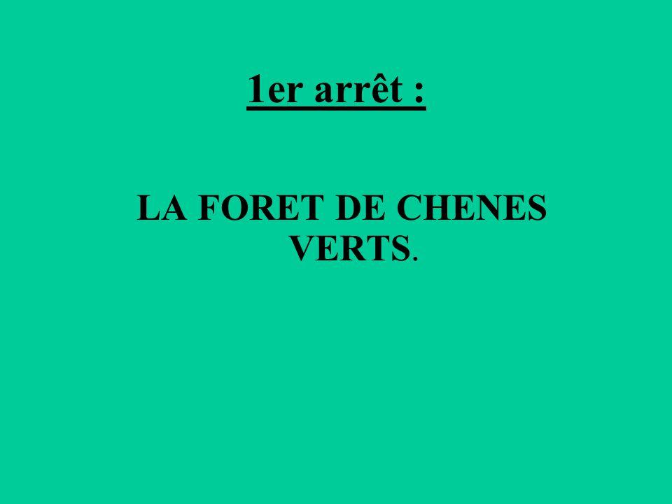 LA FORET DE CHENES VERTS.
