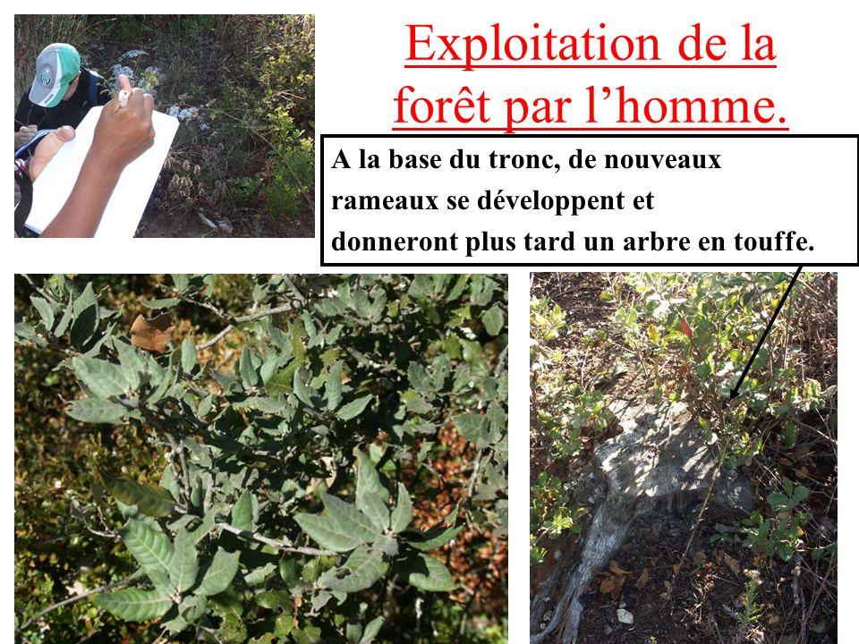 Exploitation de la forêt par l'homme.