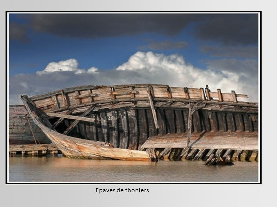 Epaves de thoniers