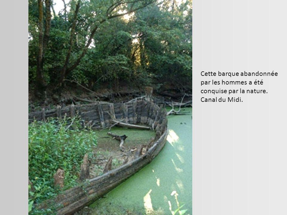 Cette barque abandonnée par les hommes a été conquise par la nature.