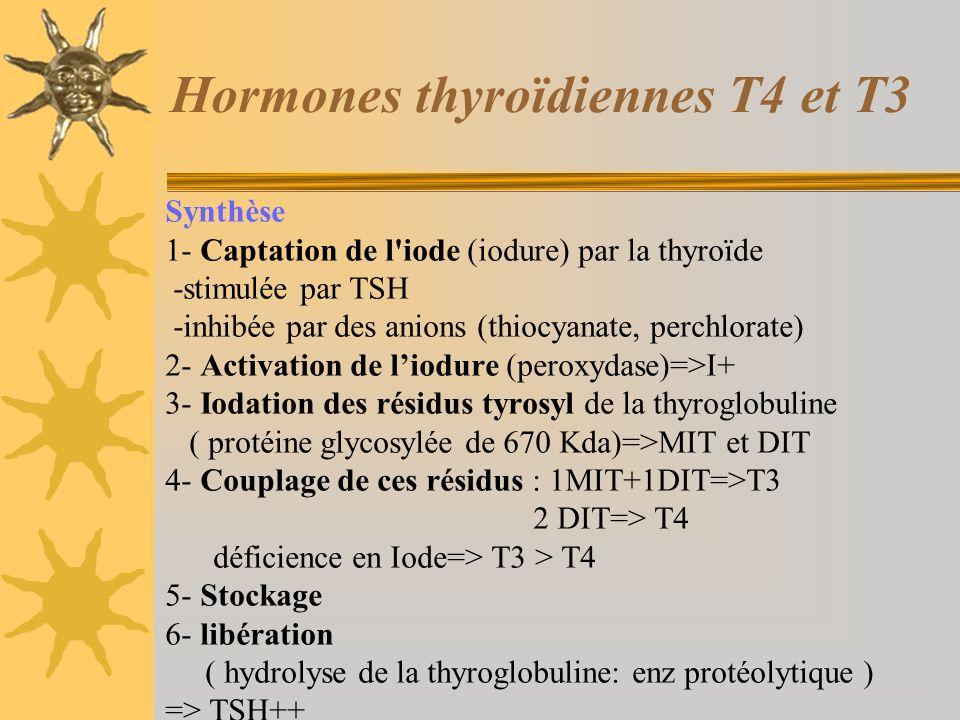 Hormones thyroïdiennes T4 et T3