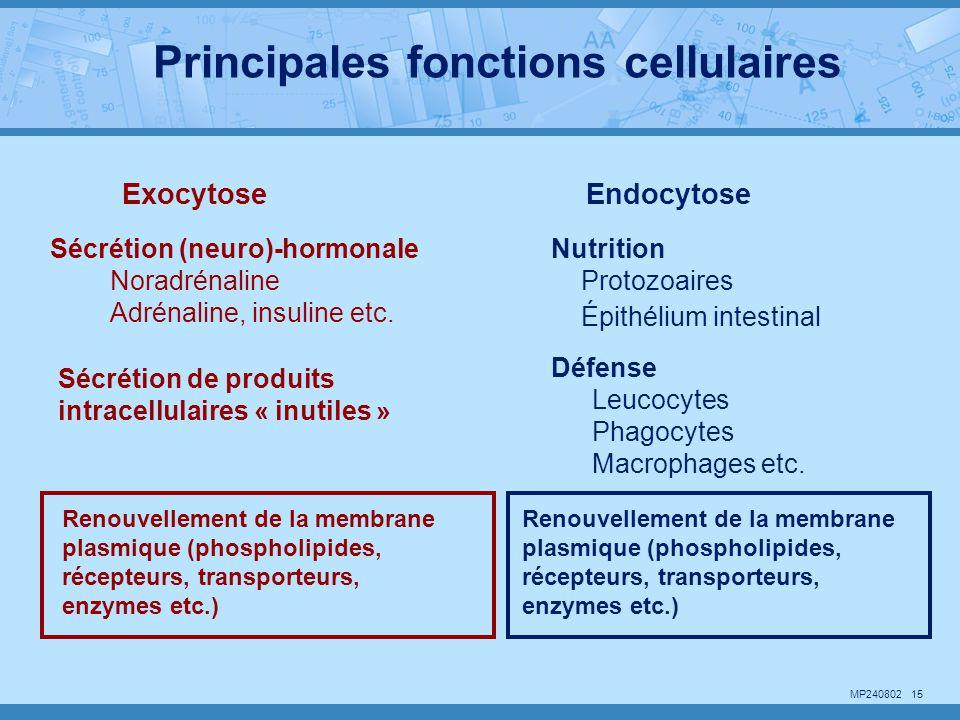 Principales fonctions cellulaires