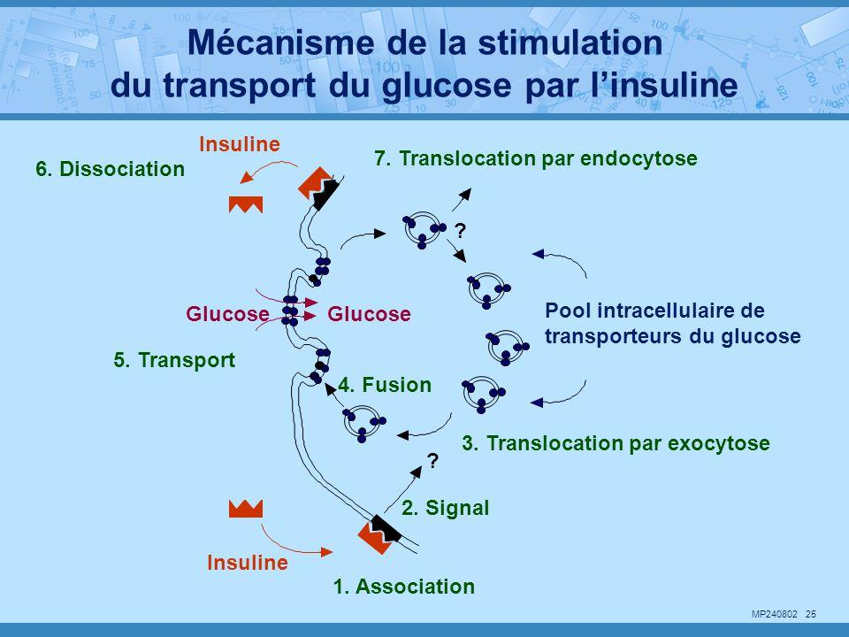 Mécanisme de la stimulation du transport du glucose par l'insuline