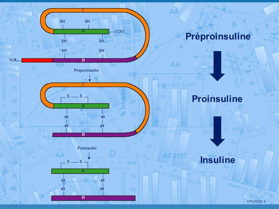 Préproinsuline Proinsuline Insuline