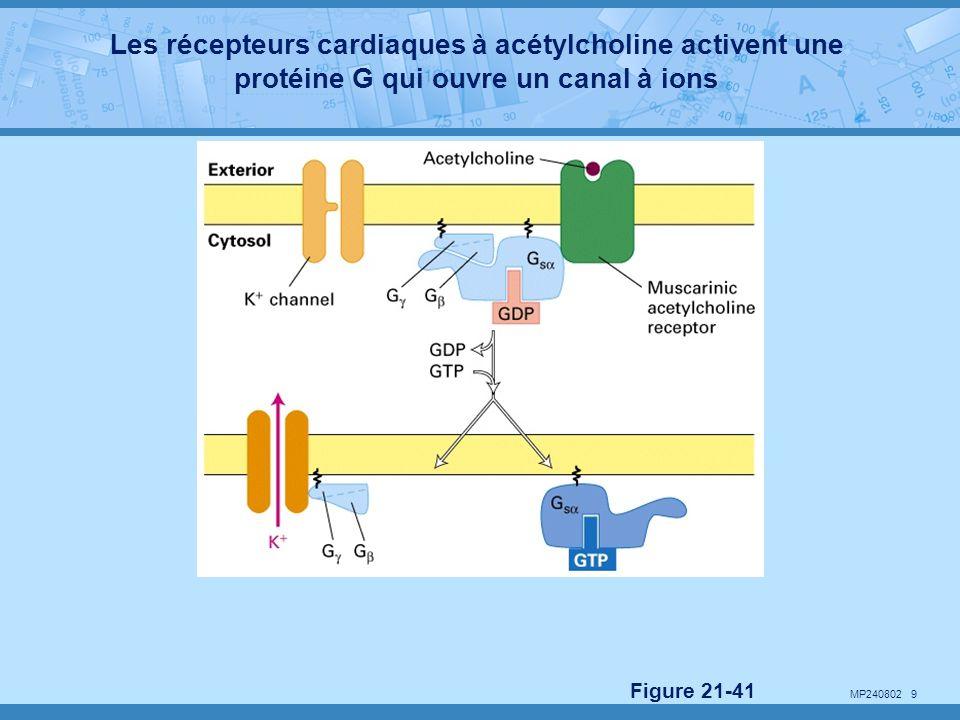 Les récepteurs cardiaques à acétylcholine activent une protéine G qui ouvre un canal à ions