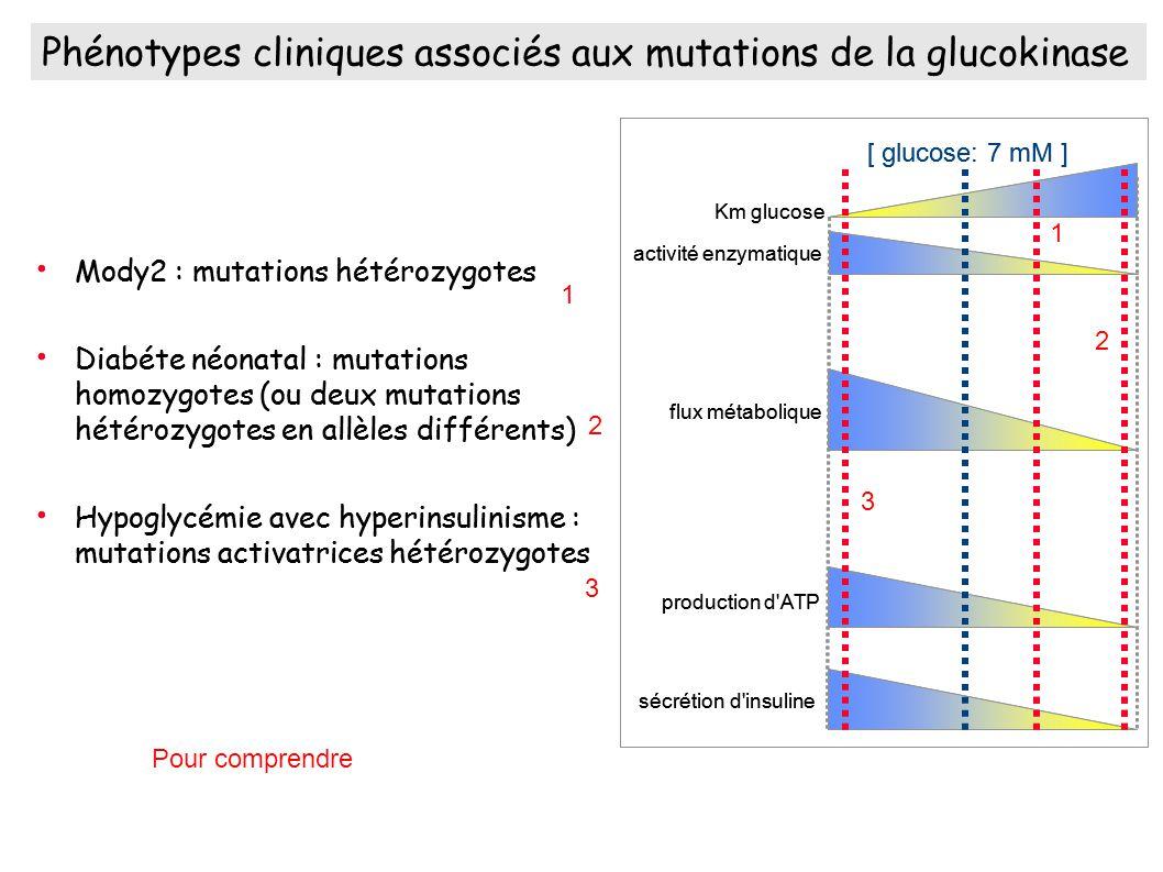 Phénotypes cliniques associés aux mutations de la glucokinase