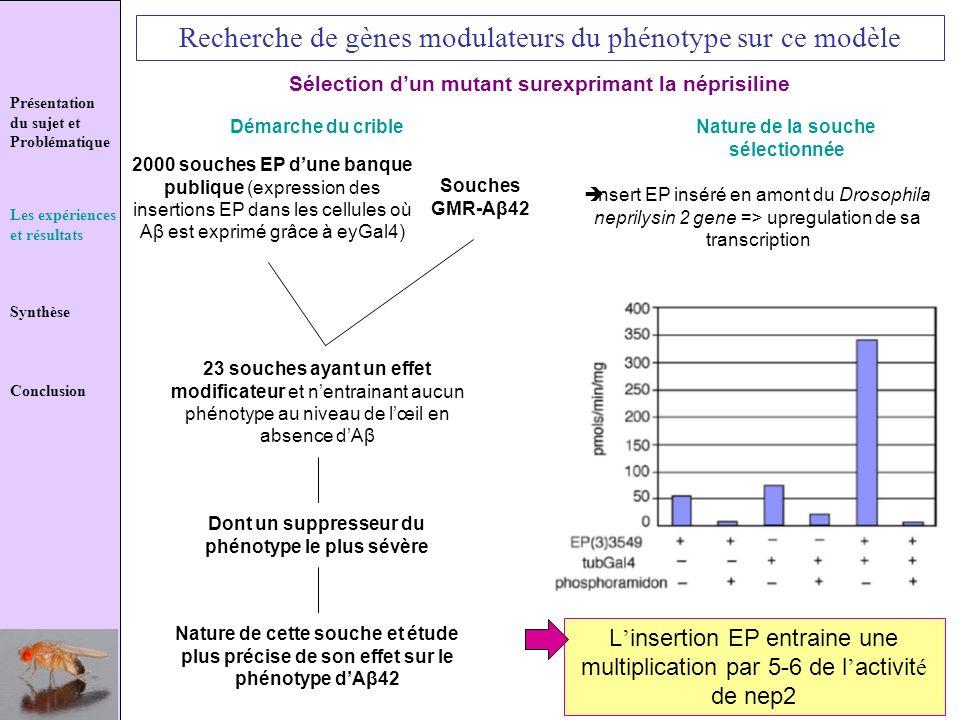 Recherche de gènes modulateurs du phénotype sur ce modèle