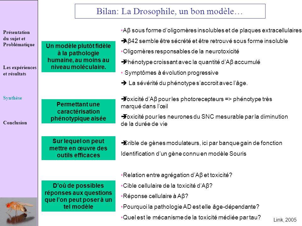Bilan: La Drosophile, un bon modèle…