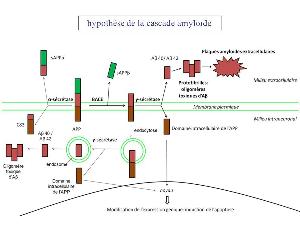 hypothèse de la cascade amyloïde
