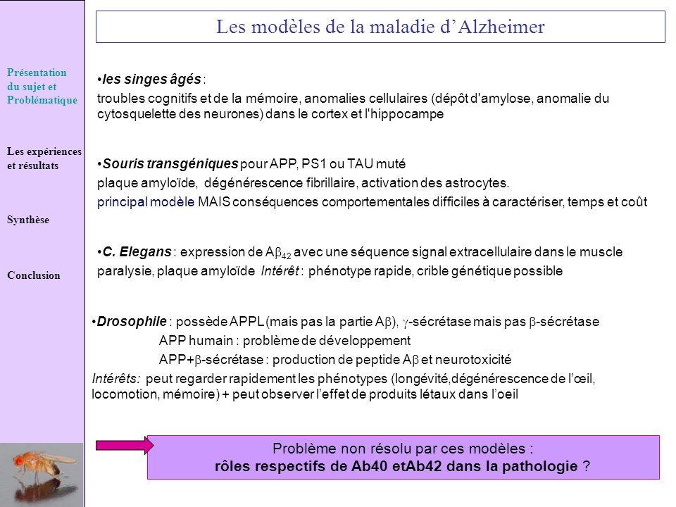 Les modèles de la maladie d'Alzheimer