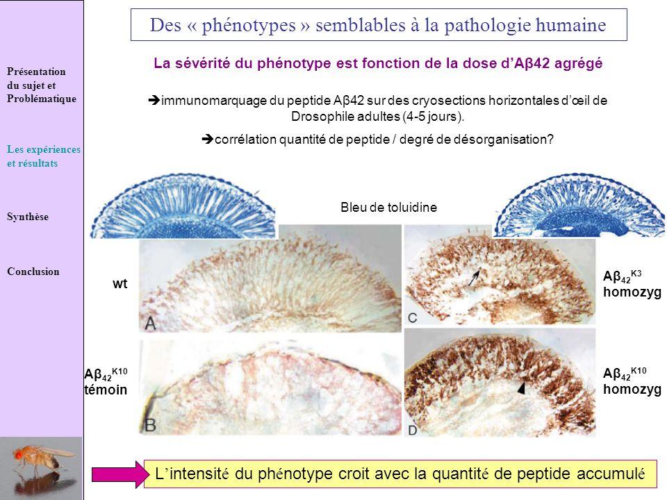 Des « phénotypes » semblables à la pathologie humaine