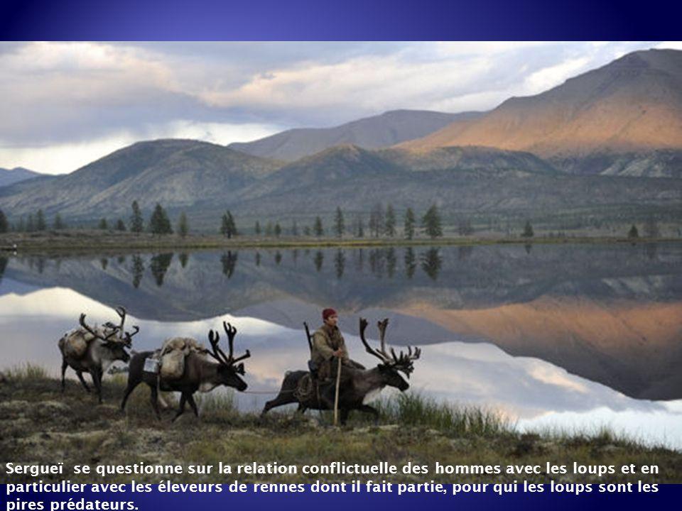 Sergueï se questionne sur la relation conflictuelle des hommes avec les loups et en particulier avec les éleveurs de rennes dont il fait partie, pour qui les loups sont les pires prédateurs.