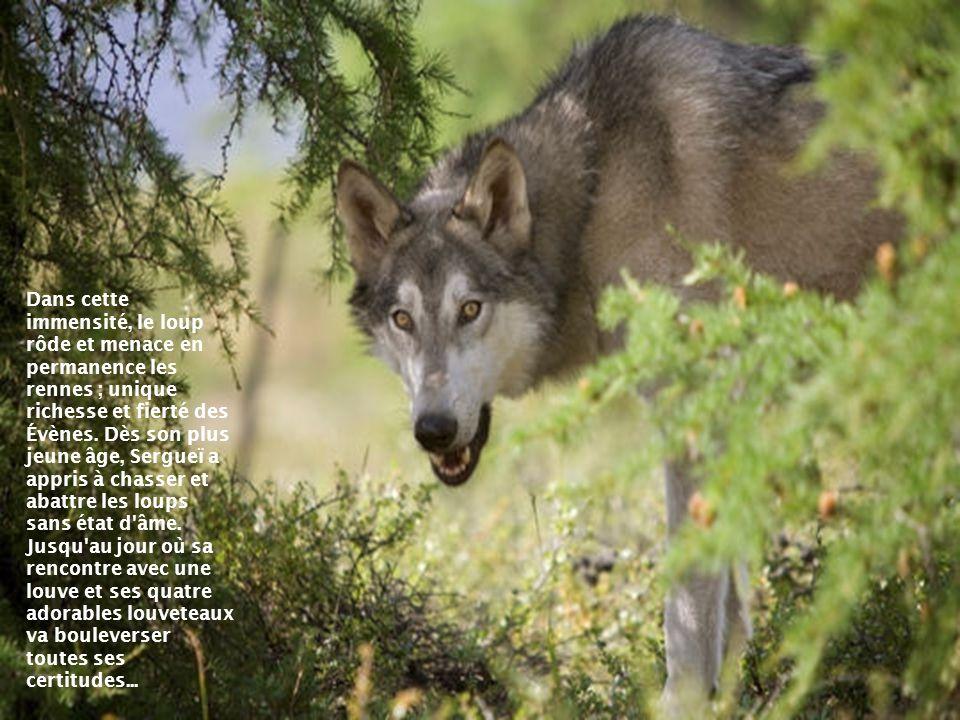 Dans cette immensité, le loup rôde et menace en permanence les rennes ; unique richesse et fierté des Évènes.