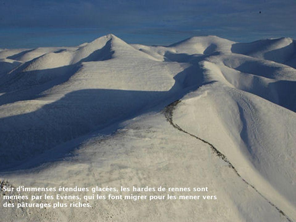 Sur d immenses étendues glacées, les hardes de rennes sont menées par les Evènes, qui les font migrer pour les mener vers des pâturages plus riches.