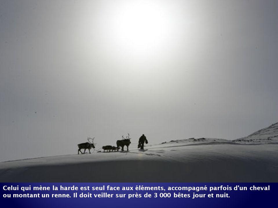 Celui qui mène la harde est seul face aux éléments, accompagné parfois d un cheval ou montant un renne.