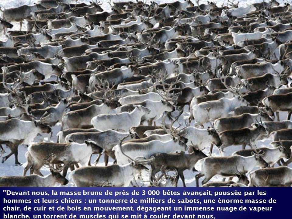 Devant nous, la masse brune de près de 3 000 bêtes avançait, poussée par les hommes et leurs chiens : un tonnerre de milliers de sabots, une énorme masse de chair, de cuir et de bois en mouvement, dégageant un immense nuage de vapeur blanche, un torrent de muscles qui se mit à couler devant nous,