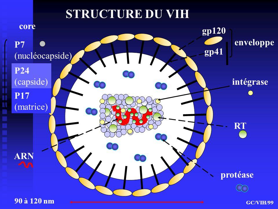 STRUCTURE DU VIH core gp120 enveloppe P7 (nucléocapside) gp41 P24
