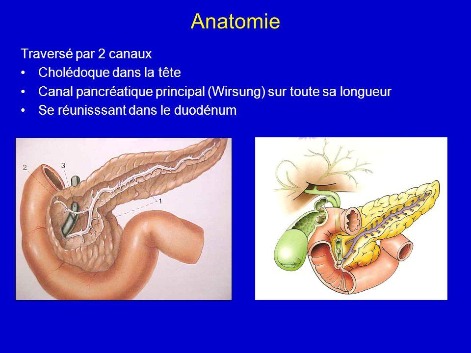 Anatomie Traversé par 2 canaux Cholédoque dans la tête