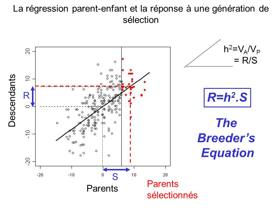 The Breeder's Equation
