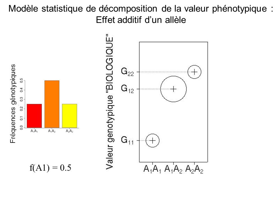 Modèle statistique de décomposition de la valeur phénotypique :