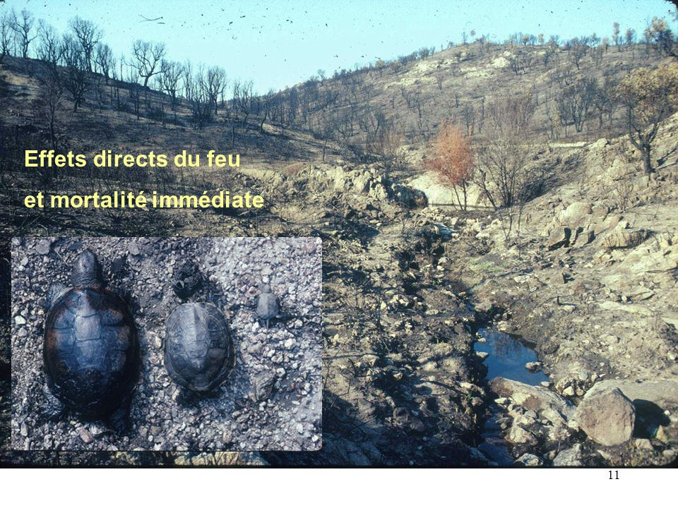 Effets directs du feu et mortalité immédiate