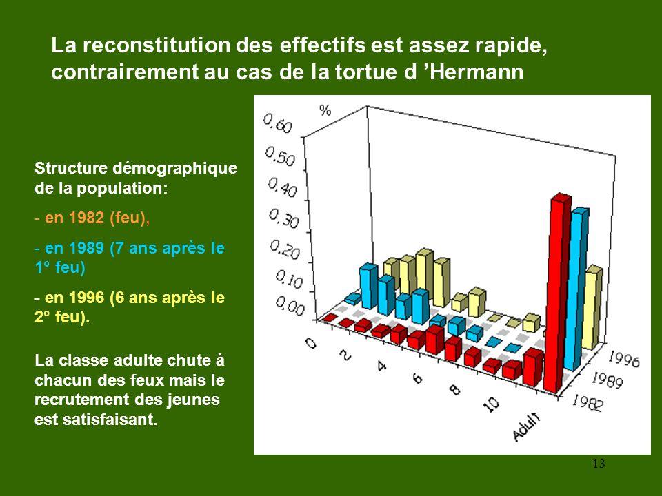 La reconstitution des effectifs est assez rapide, contrairement au cas de la tortue d 'Hermann