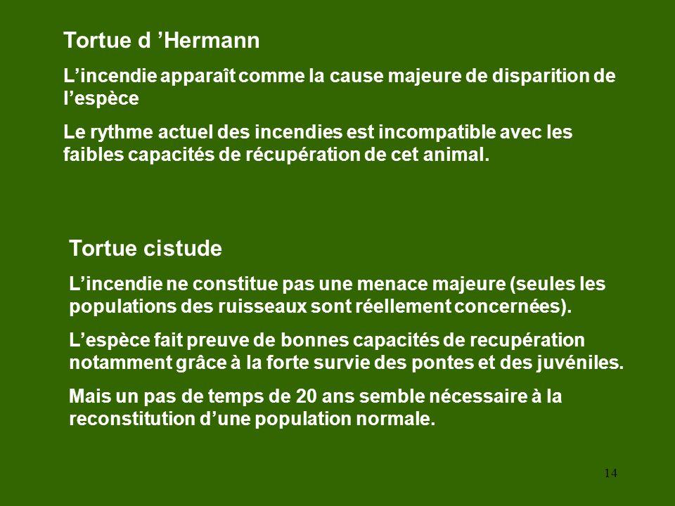 Tortue d 'Hermann Tortue cistude