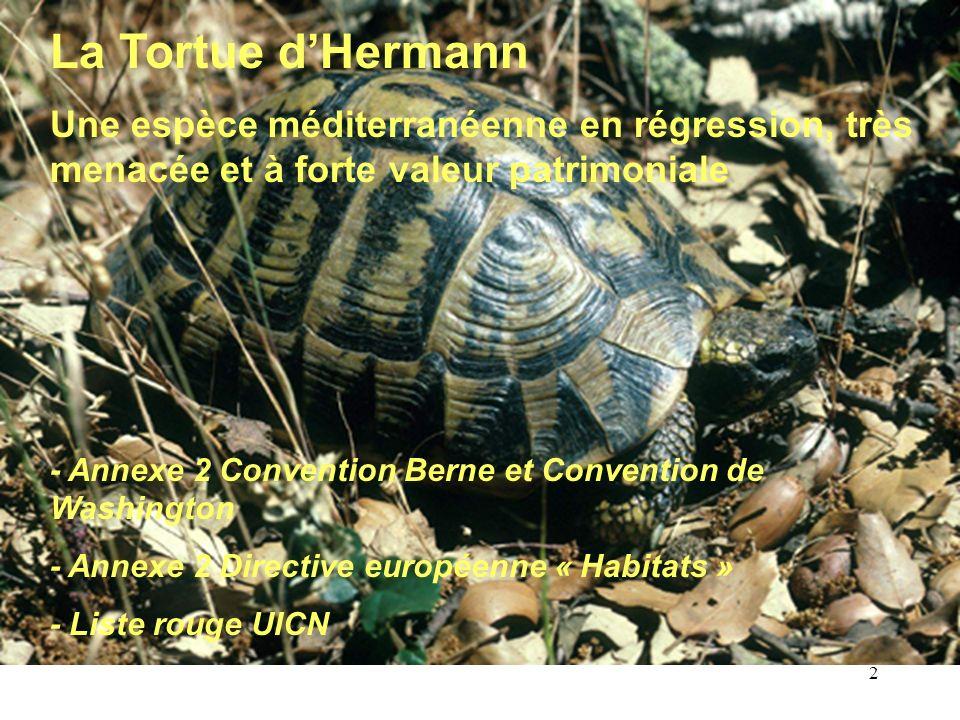 La Tortue d'HermannUne espèce méditerranéenne en régression, très menacée et à forte valeur patrimoniale.