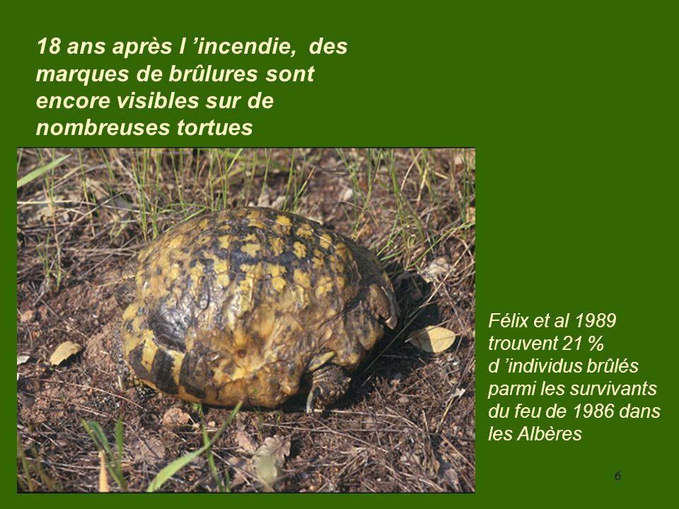 18 ans après l 'incendie, des marques de brûlures sont encore visibles sur de nombreuses tortues