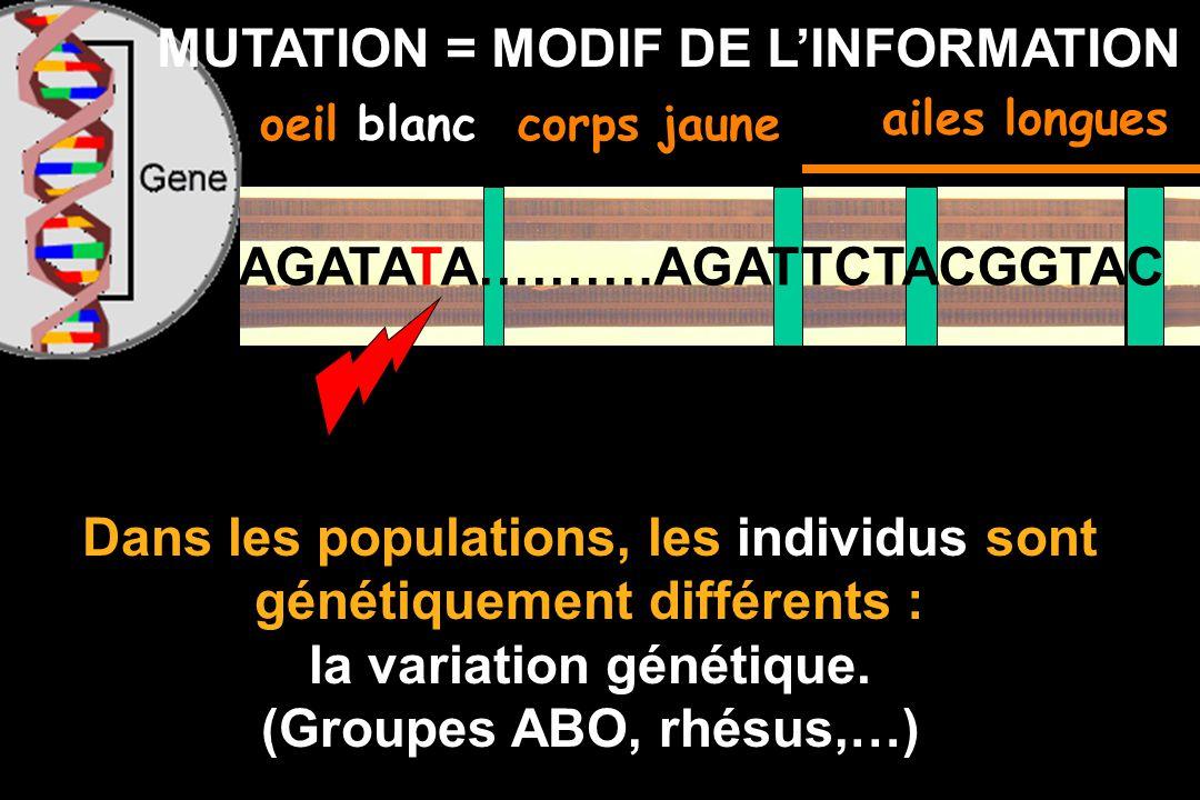 MUTATION = MODIF DE L'INFORMATION
