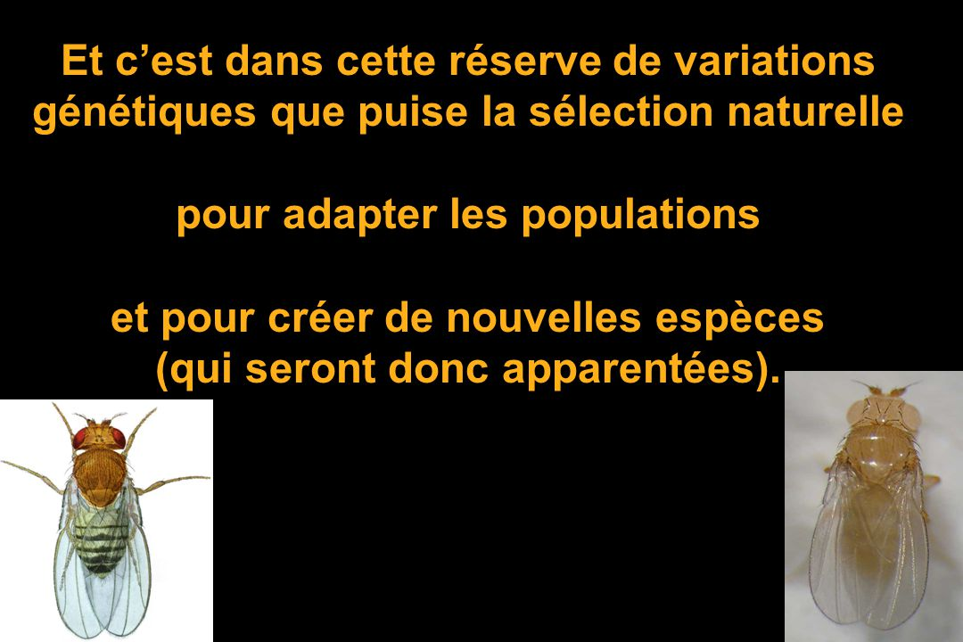 pour adapter les populations et pour créer de nouvelles espèces