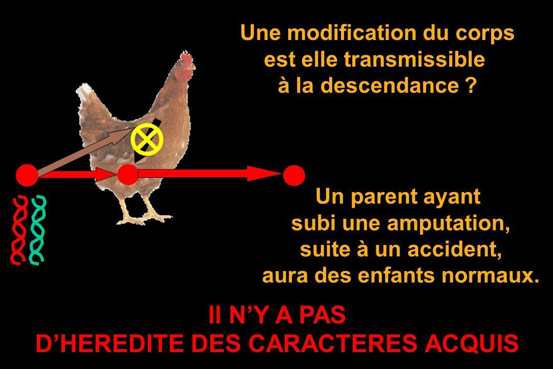 Il N'Y A PAS D'HEREDITE DES CARACTERES ACQUIS
