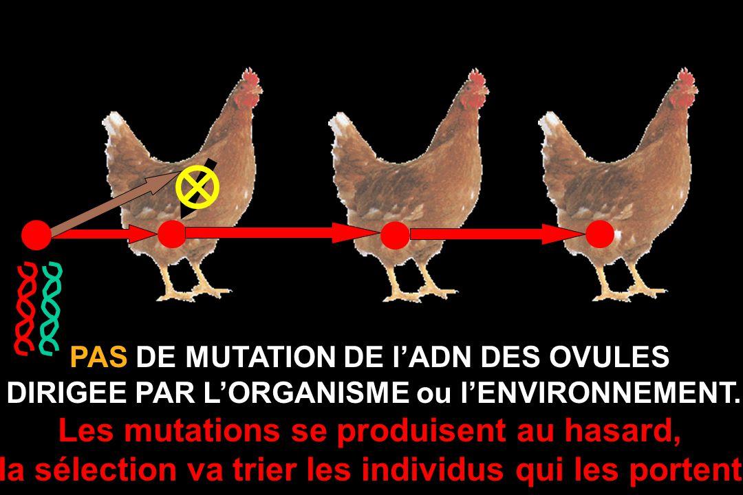 Les mutations se produisent au hasard,