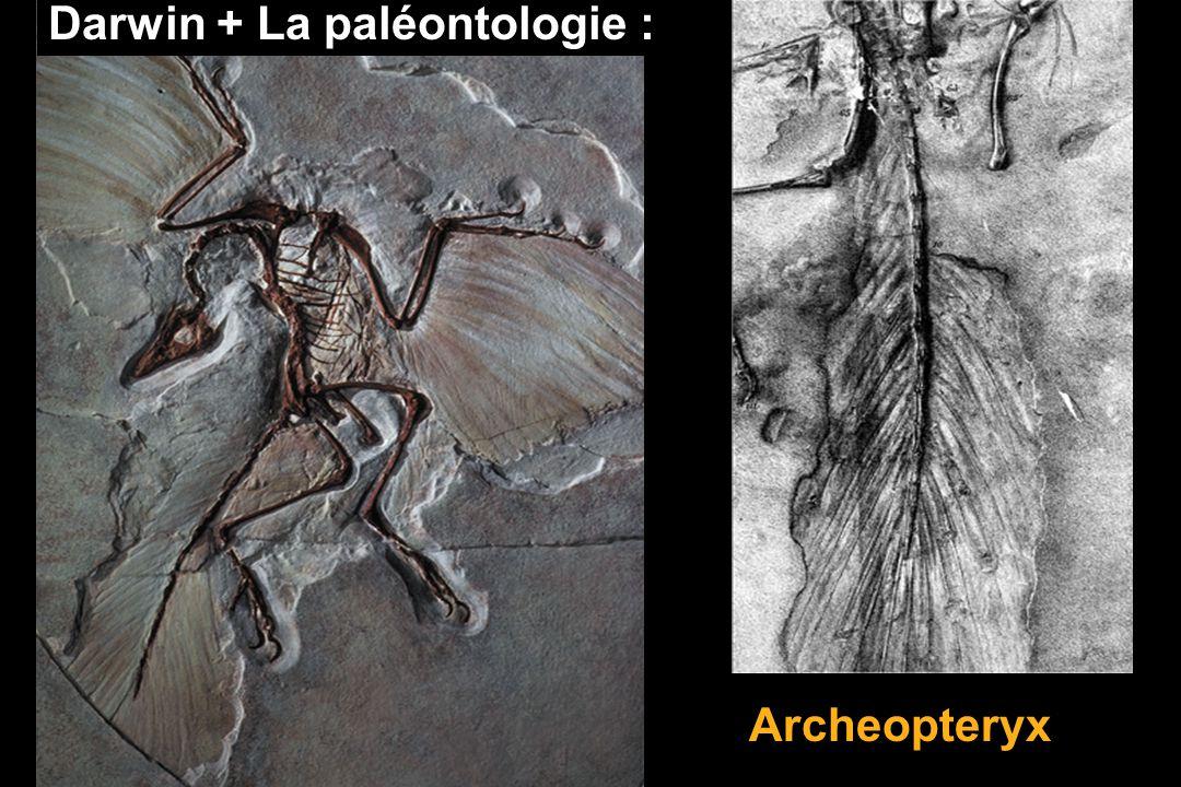 Darwin + La paléontologie :